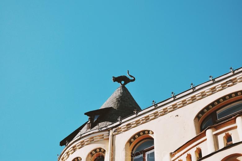 gatto di Riga