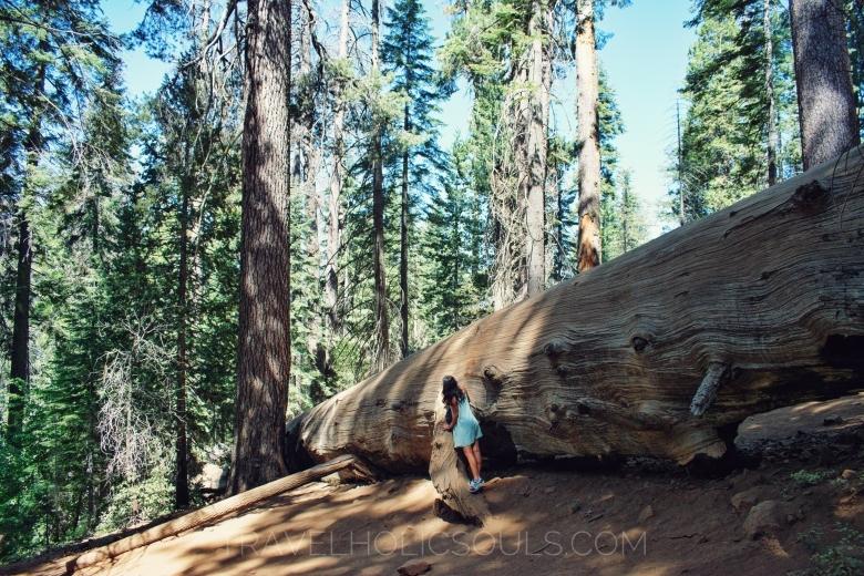 cosa vedere parco Yosemite