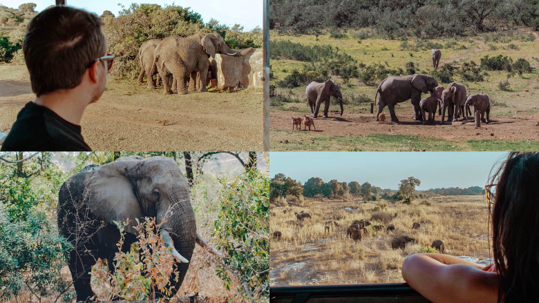 Addo National Park, visitare
