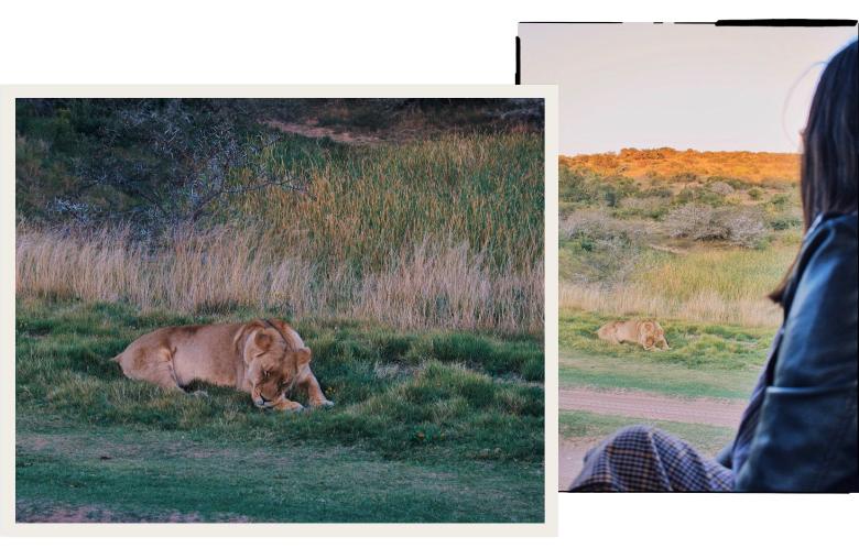 animali-fantastici-sudafrica