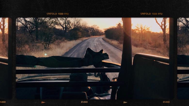 Cosa vedere al Kruger, safari