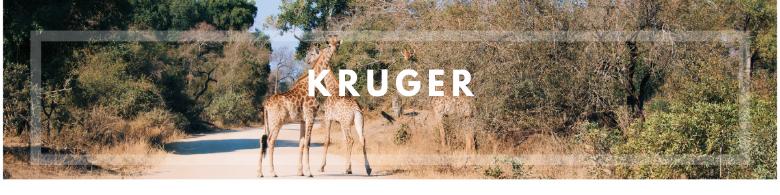 Kruger banner, Sud Africa