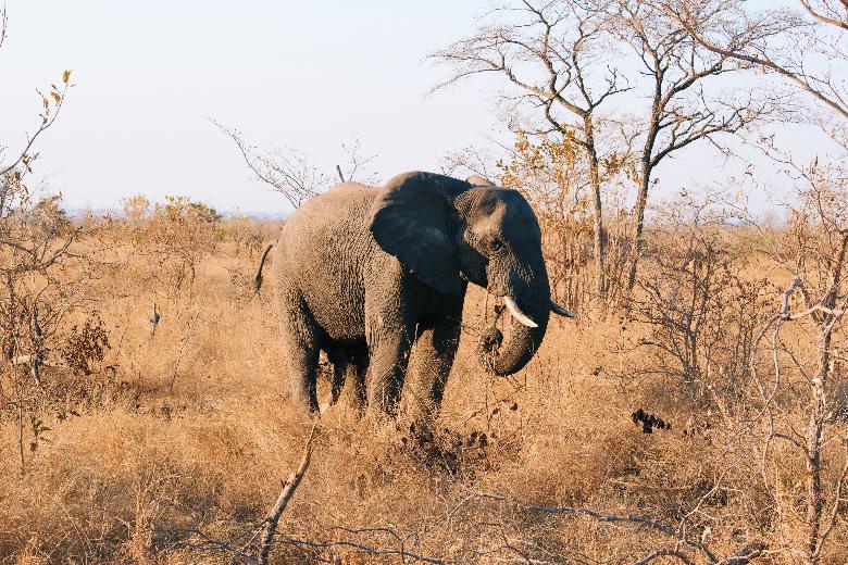 Viaggio in Sudafrica, cosa vedere