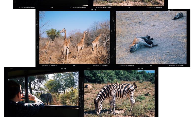 Visitare Kruger, cosa vedere