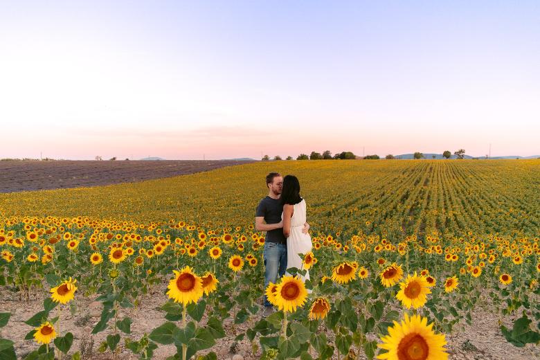campi di girasole in provenza